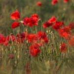 Thanks to @simoncwoodley for sharing these pictures with us today. #NeverForget #Somme100 https://t.co/t8i2aDcKgX