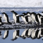 Antarctica's penguins could be decimated by climate change