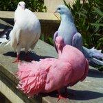 นกไอดอลสัดๆ สวย สง่า ปัง55555 #มงลง https://t.co/pwjK18VAEc