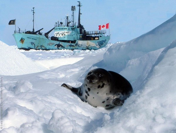 RT @peta: Today is #CanadaDay. Here's to the day when the commercial seal slaughter comes to an end. https://t.co/ZNyMlzPopb https://t.co/1…