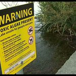 #Q13FOX Toxic algae in some our local waters may be harmful to swimmers. @JohnHopperstad reports live. https://t.co/eXDnBuJGfO