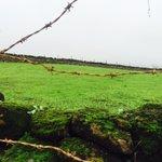 {اعلموا أن الله يحيي الأرض بعد موتها ۚ قد بينا لكم الآيات لعلكم تعقلون} #غرد_بصورة #ظفار #عمان #خريف_ظفار_2016 https://t.co/O96R9Q0pAT