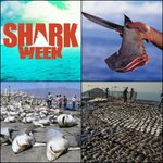 For every human killed by sharks a year, on average 10 MILLION sharks are killed. Whos the real killer? #sharkweek https://t.co/7zYogaHvwo