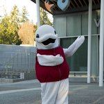 Happy Canada Day! Give BeeBop & the #vanaqua team a wave during the Canada Day parade tonight at 7 p.m. https://t.co/OlEG82xz65