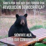 Tienes curiosidad sobre qué es @RDemocratica? Acércate MAÑANA 10am Paseo Liberad y hablemos de RD #valdiviacl https://t.co/Dn5Uu1FUxE