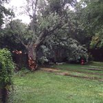 Storms nocked this large tree into a home in Fayetteville just off Sycamore. https://t.co/U7PiZYPltb