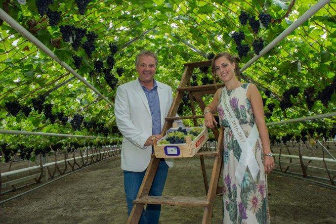 Eerste kistje druiven geveild voor € 10.750 https://t.co/eqM56Jo5tX https://t.co/A6lD6tzbpa
