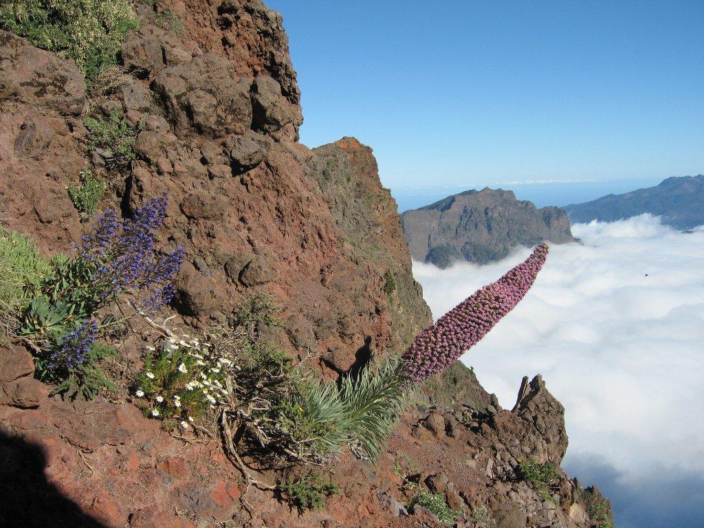 El Parque Nacional de la Caldera de Taburiente en @visitalapalma es uno de los 4 que existen en @canarias_es https://t.co/X3yd4w2klB