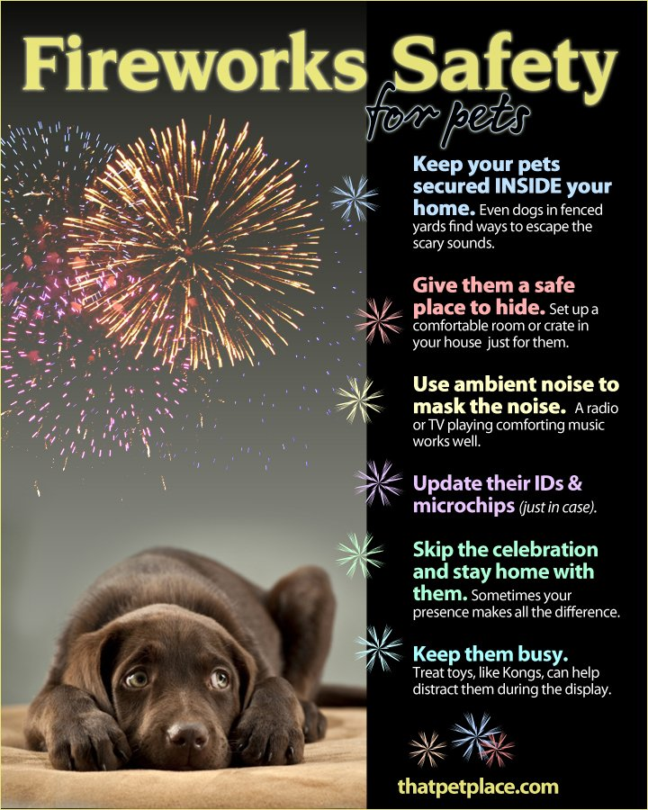 Prepare and Protect Your #Pets From #Fireworks: https://t.co/l2zmnZ6G2M https://t.co/ZpEopQP90S