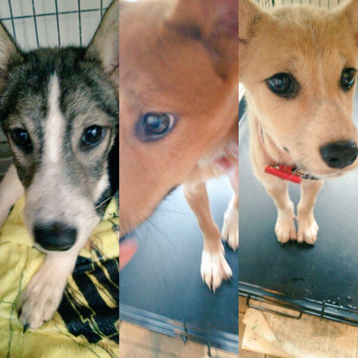 被災地熊本からやってきたとっても可愛い仔犬や仔猫たち。都会に来ておっかなびっくりな子たちを優しくお世話してくださる預かりボラさんを大募集中! 《一時預かりボランティア》https://t.co/aIK1jf7oCA https://t.co/Gv8yRvLNzK