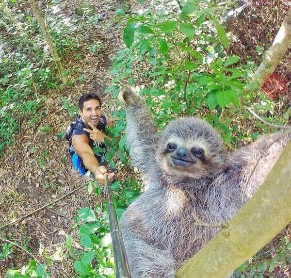 This #selfie single-handedly justifies the existence of selfie-sticks. #slothselfie @reddit https://t.co/ekb3C3H7aK https://t.co/twRDRMf973