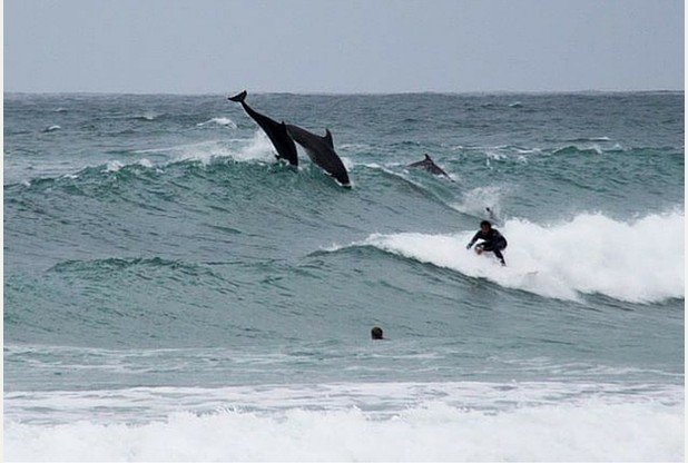Dolphins show surfers how to do it properly off Cornwall https://t.co/Vhj0xbOWgh https://t.co/fe0gy69qIT