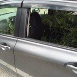 今年入った新人が、滅茶苦茶になっている僕の車内を見て「この竹は何に使うんですか?」と、聞いてきました。 和菓子屋が7月に竹を運ぶ理由なんかひとつしかありませんよね。 もちろんパンダの餌です。 https://t.co/XiddUgan6O