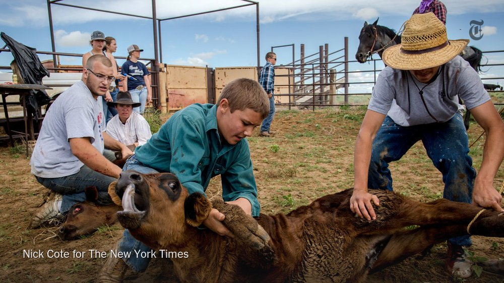 Cowboy etiquette: Young people wrestle the cattle to the ground, older ones handle the iron. https://t.co/jmvWICh5WS https://t.co/VitGQKARZB