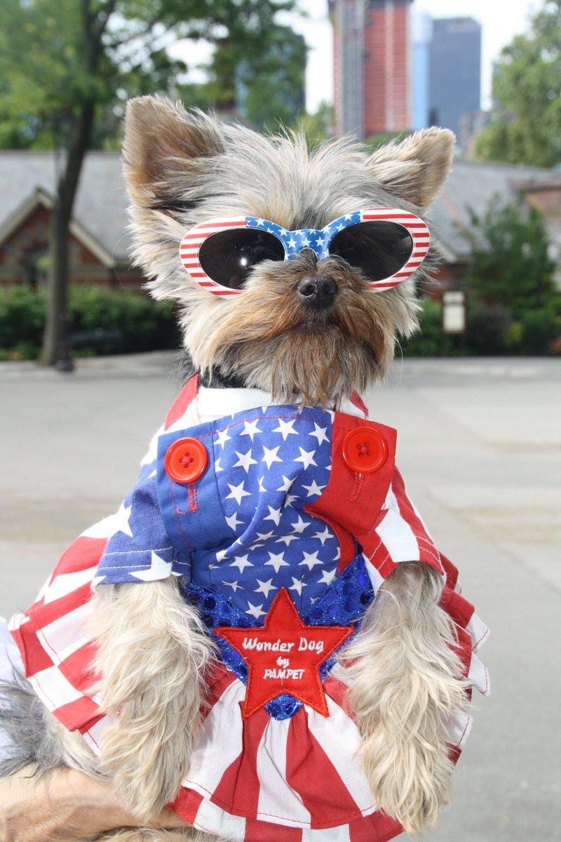 #MacysFireworks scare me! Make sure ur pets are safe & inside for any #fireworks #SchmittyTheWeatherDog #4thOfJuly https://t.co/YyHLUpVOFG