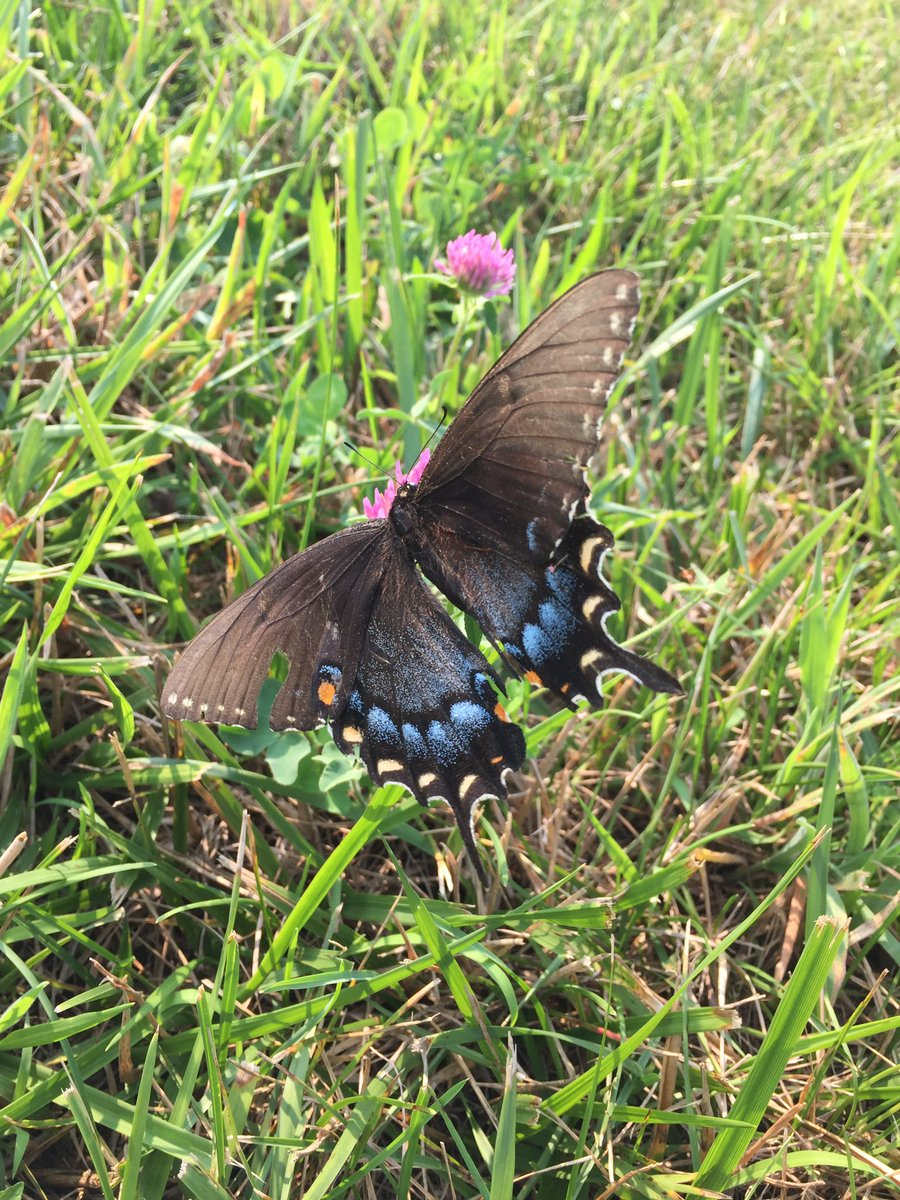 Beautiful butterfly on the farm https://t.co/IzmigtVq2D