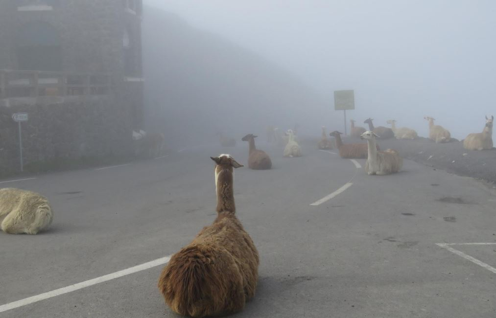 The locals are already claiming their spots on the Col du Tourmalet ahead of Saturdays stage https://t.co/fZzfytLwwA