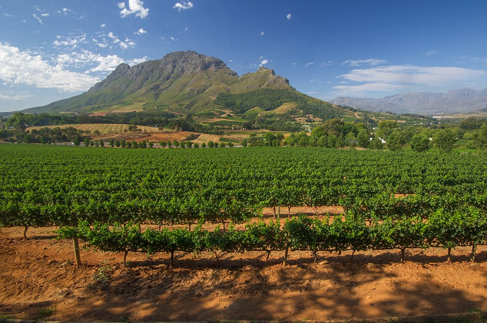 Come for the views, stay for the 🍷 in South Africa, according to @FluxMagazine »