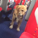 This dog is walking herself up and down the train so everyone can stroke her 😿😿🐶🐶🐶 https://t.co/WRVOx9TiNi