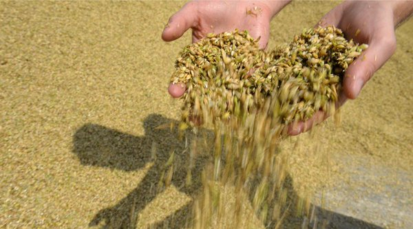 Russia is world's top wheat producer for 2nd year running - US Department of Agriculture
