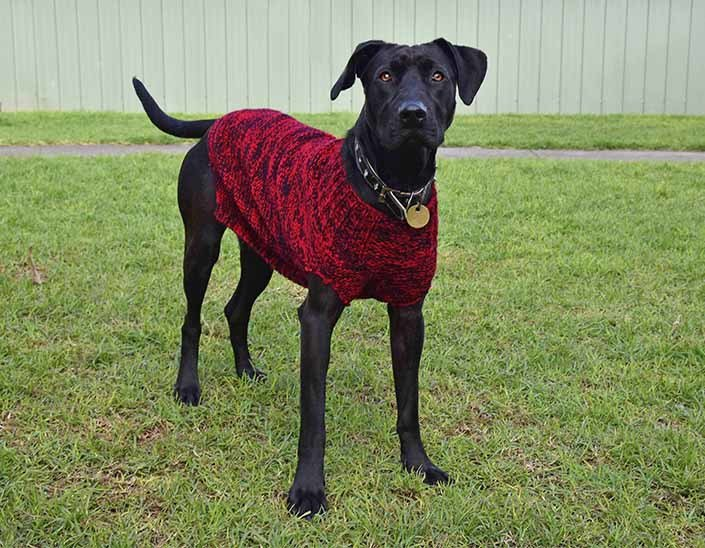 Please RT: We need help knitting some winter woollies for our bigger shelter dogs! https://t.co/TxJLnllJ76 https://t.co/wIwYBaG9vS