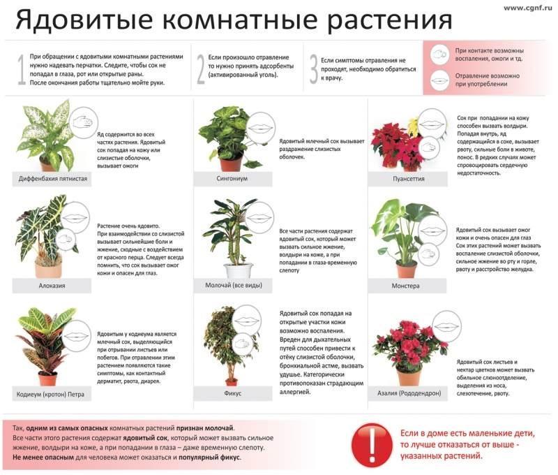 Растения под запретом (РФ) - Садоводка 43