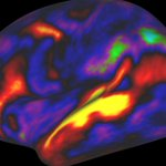 Scientists map the brain's shell with more extraordinary detail