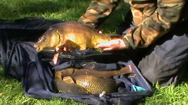 Grass Carp https://t.co/J4cAQqkrUq #carpfishing #fishery #kentfishing #kent #fishingtips #fishing ht