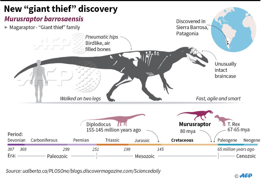 """#NEWSGRAPHIC It's got pneumatic hips, an unusually intact braincase and it's a """"giant thief."""" #dinosaur @AFP https://t.co/ANJgr1wmzT"""