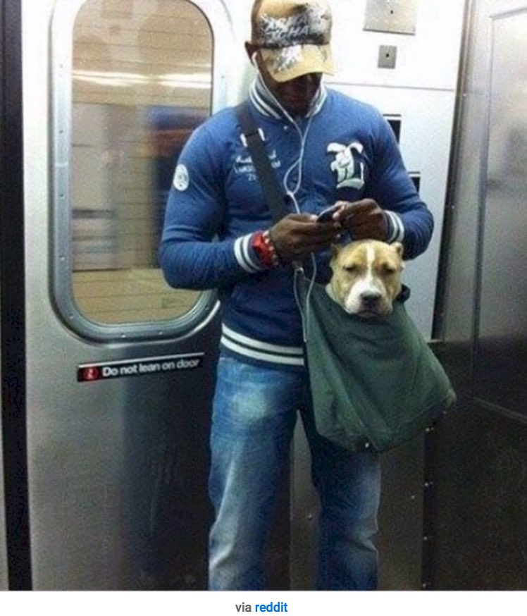 TIL you can take dogs on the New York subway as long as they're in some sort of carrier. #dogsinbags https://t.co/f0bEYvJxyx