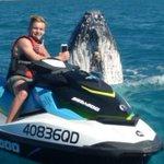 Humpback whale photobombs