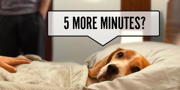 A3. Tossing & turning can disturb ur partner & ur pet! Upgrade to a bigger bed for better sleep #SNSweepstakes https://t.co/57WXybBwKH