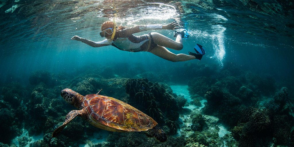 How to take the best underwater photos, ever!