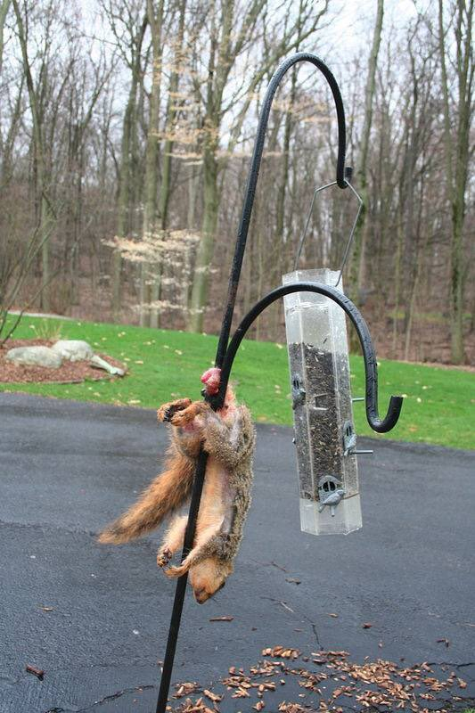 雪に刺さったキツネが発見される(画像あり) [無断転載禁止]©2ch.net YouTube動画>15本 ->画像>274枚