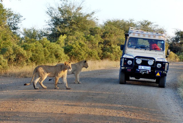 The world's most amazing safari park? Probably, Kruger, South Africa. Here's why: