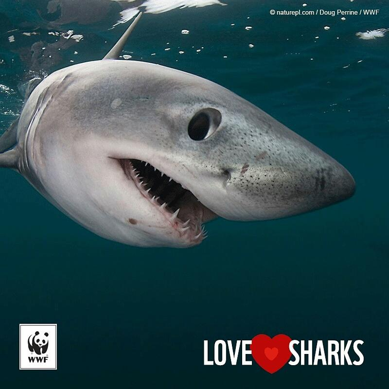 Happy #Shark Awareness Day! RT this to let the world know you love these #amazinganimals https://t.co/hE7ajTvpAx
