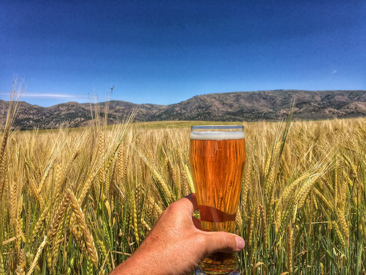 Parting shot from Idaho's barley fields from a great 2 days on a beer-themed #BarleyFieldTrip. (@LetsGrabABeer) https://t.co/uVzmDOAIpu