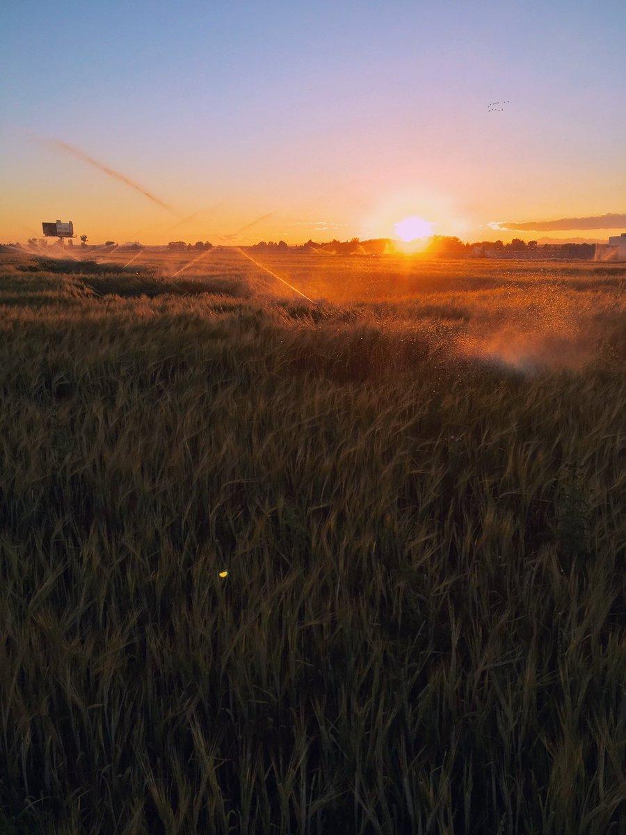 Golden Hour in the Idaho barley fields had me like