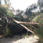 Último incidente con un árbol nos da la razón de la necesidad  de desbrozar de una forma periódica.. en #ElSaladillo https://t.co/Pkzyqv8NPX