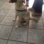 Se encontró este cachorro en cavancha #Iquique. Lo pueden reclamar en @radiopaulina por favor RT https://t.co/QqnE7TwJK5