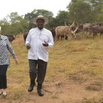 #Uganda President #Museveni takes @USAmbUganda on tour of the indigenous long-horned cattle farm in Rwakitura https://t.co/xYiJFYFb4H