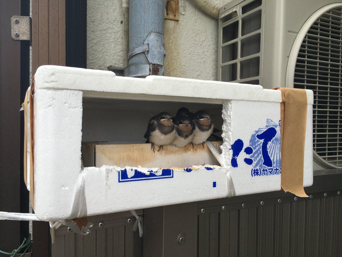 多摩市のル・コルビュジエって呼んでる近所のおじいちゃんがいるんだけど、最近鳥の巣を作ったらしい。 https://t.co/9VWQmIsZGB