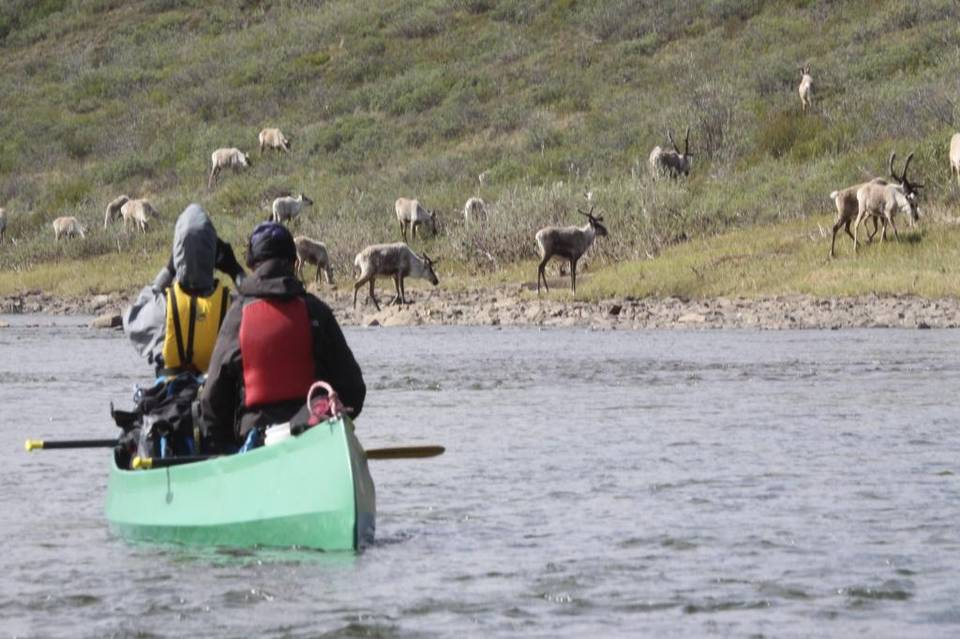 Zimo's Alaskan Arctic adventure: Tundra, canoes and caribou