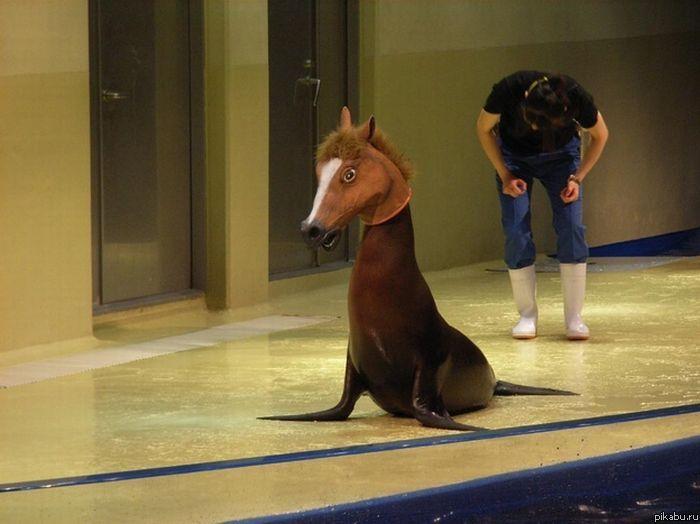 Seal wearing horse mask! https://t.co/746TC9mj6V https://t.co/aTKsNzkUqS