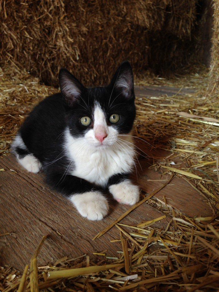 Barn kitties! Too cute! @NYFarmer https://t.co/sDKctpbjdJ