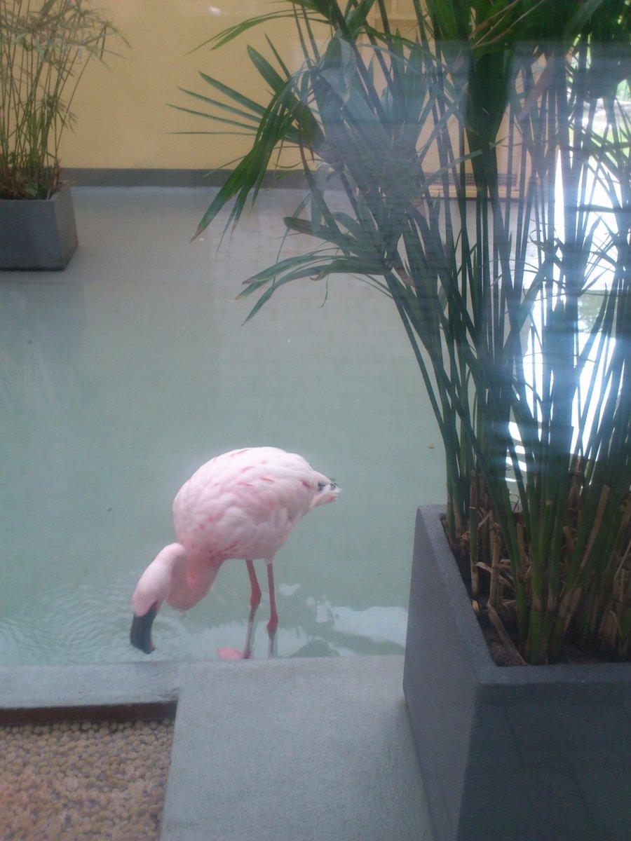 Розовый фламинго производил транссексуал 1 фотография
