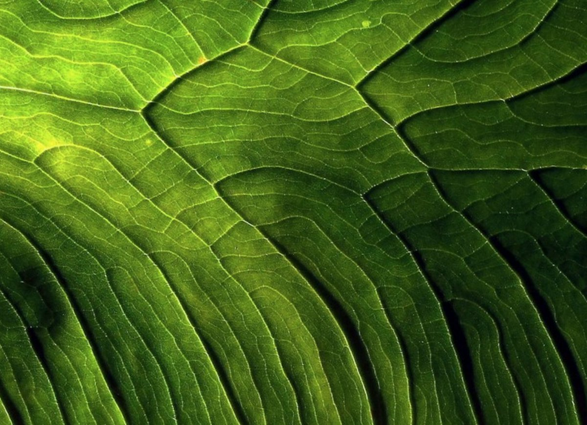 If you like to take photos, @lilybet has a challenge re: abstract nature photography: https://t.co/zCv3H35bJg https://t.co/iFdcxbu8H1