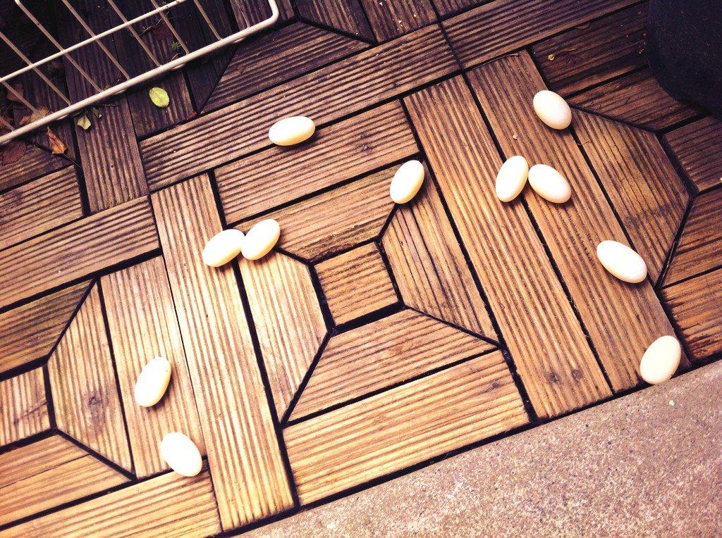 朝起きたら‥亀がざっくりとベランダ産卵していた。 https://t.co/k4pjqMxS3n