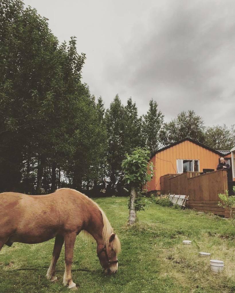 #islandsongs week 5 ft A HORSE https://t.co/jTRLKUiuwR
