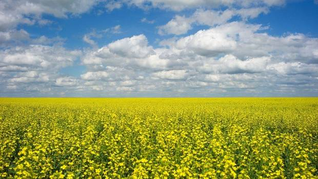 Canada's agriculture minister hopeful about deal in China canola dispute from @GlobeBusiness